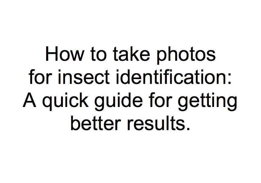 Click here for simple tips on taking better photos for insect identification .