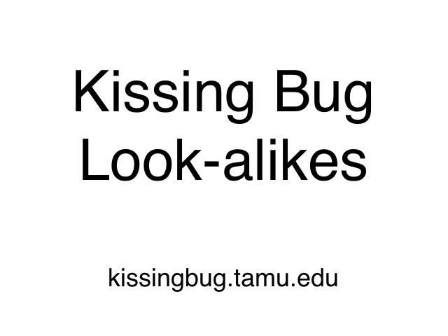 Insects confused with kissing bugs