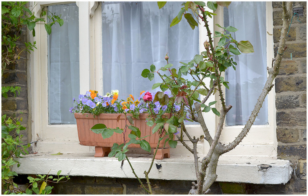 weekend snapshots - window box.jpg