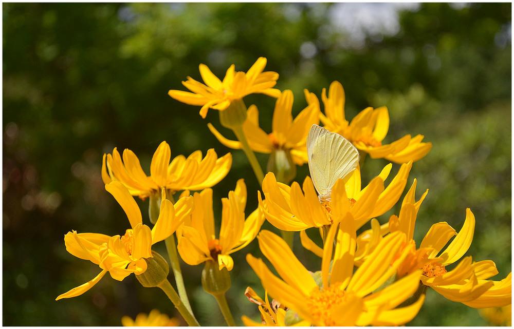 Wisley Gardens.jpg
