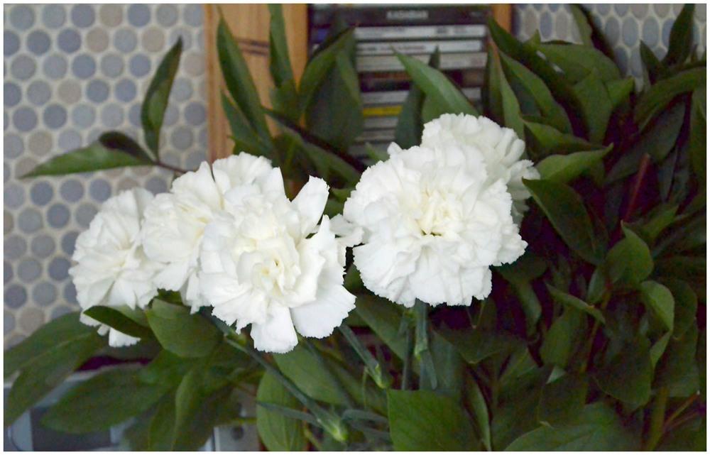 White carnations.jpg