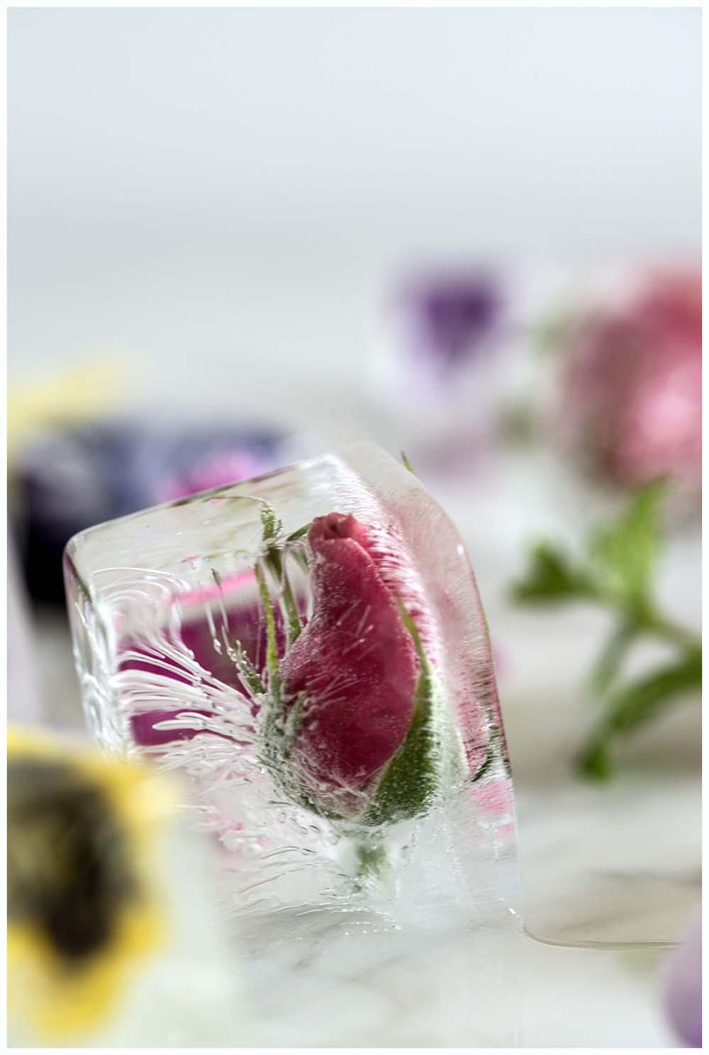 Frozen Rose Ice Cube