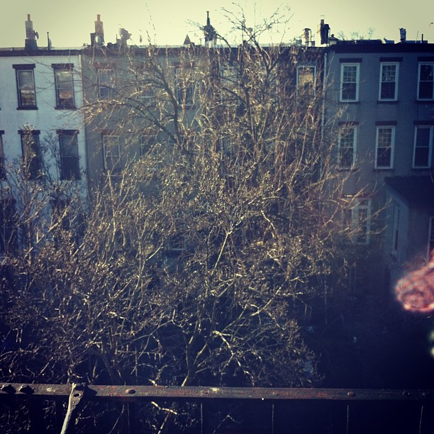 Me love Brooklyn morning