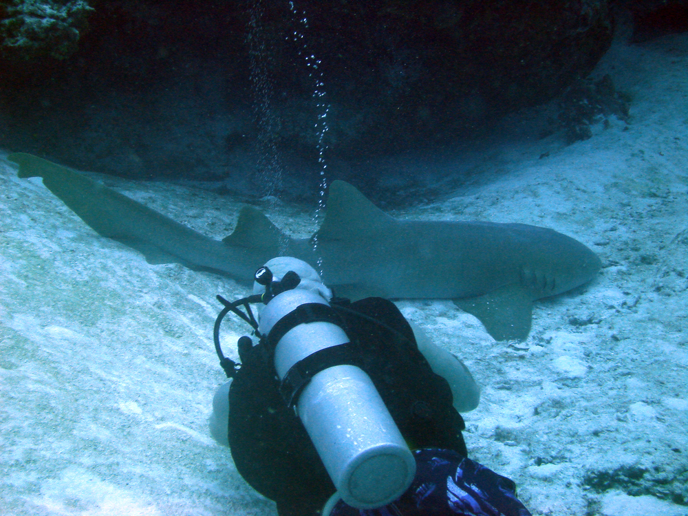 Hanging with a nurse shark in Cozumel