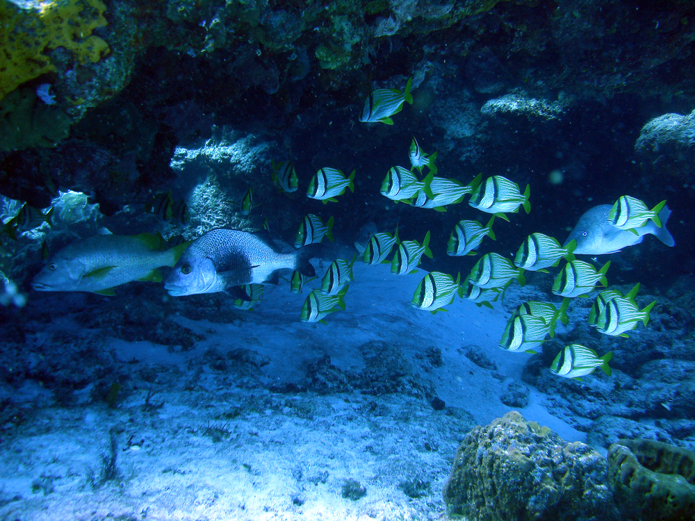 School of fish in Cozumel