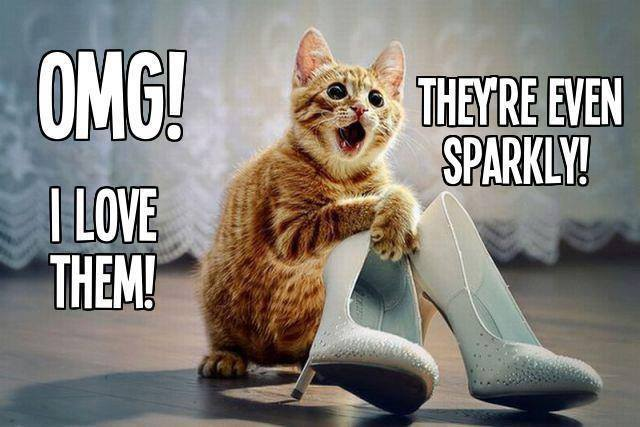 cat sparkle shoes.jpg
