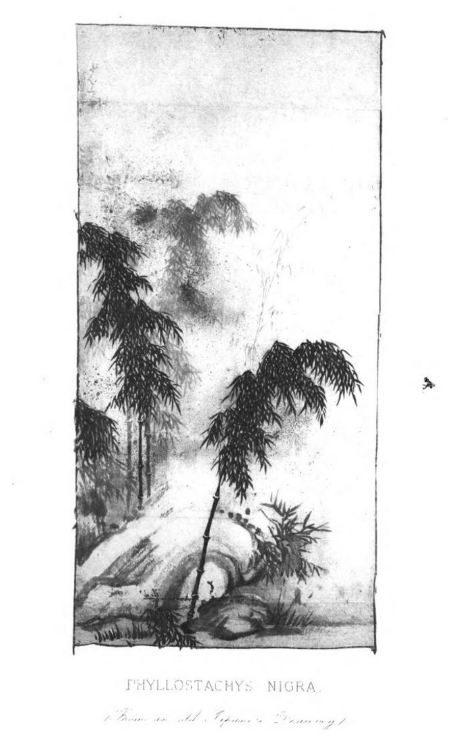 illustration from The Bamboo Garden, published 1896