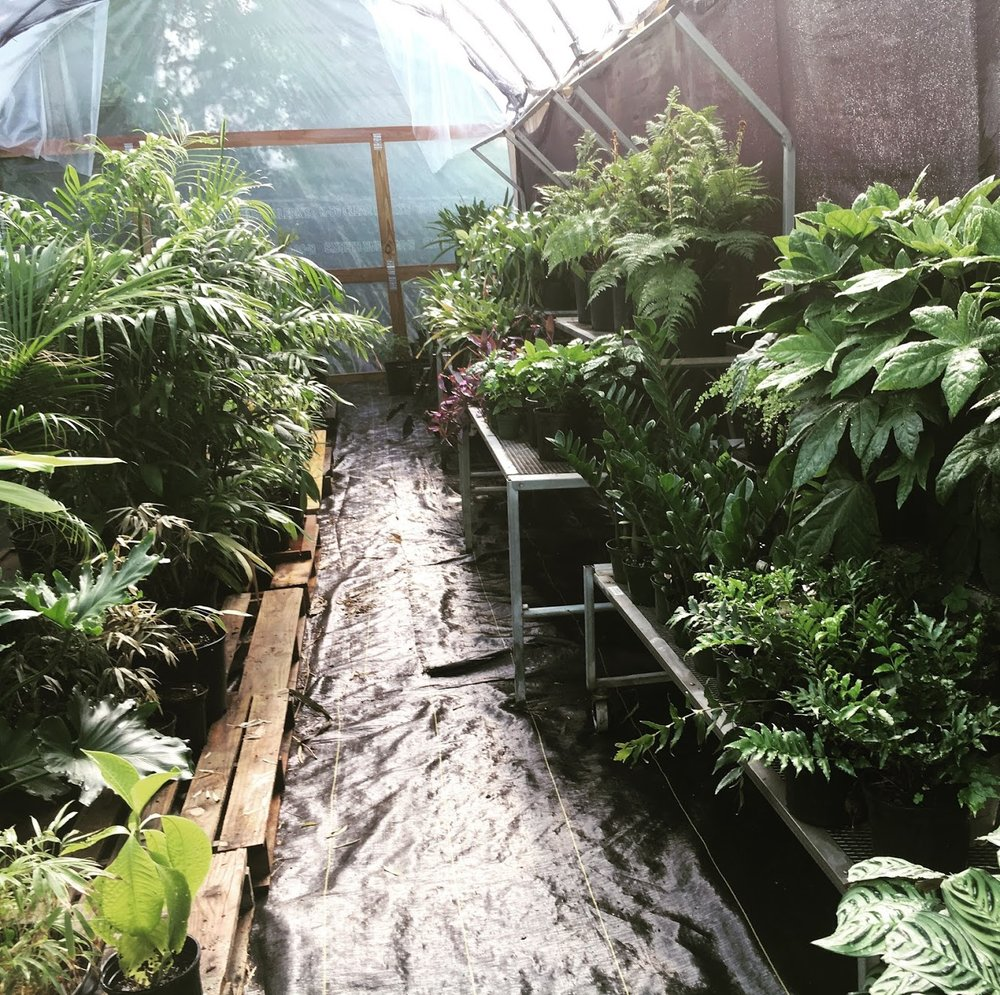 Ninth Ward Nursery greenhouse