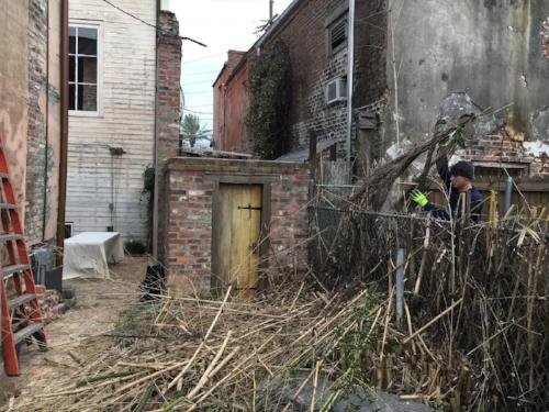bamboo removal ninth ward nursery3.jpg