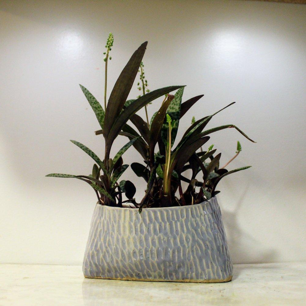 ninth ward nursery - potted plant1.jpg