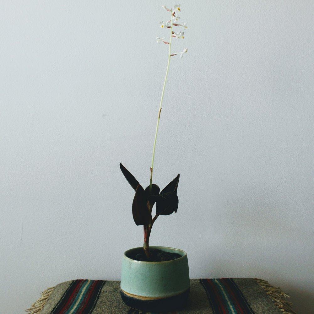 ninth ward nursery - potted plant4.jpg