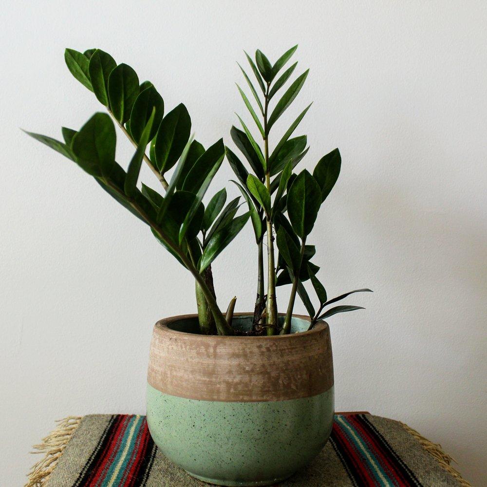 ninth ward nursery - potted plant5.jpg