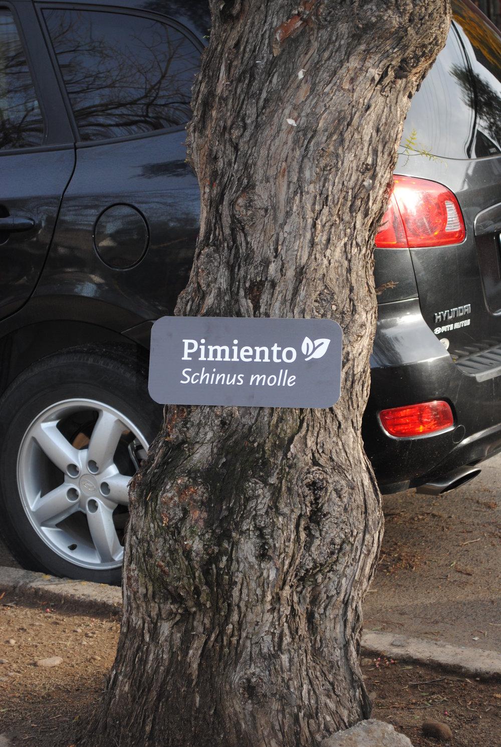Carteles Plaza (3).JPG