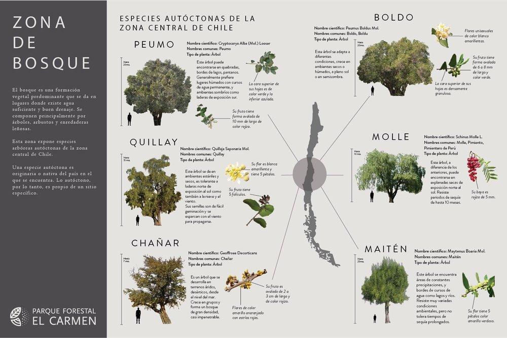 Soporte Zona Bosque.jpg