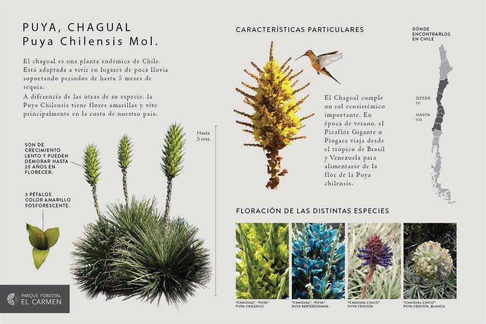 Soportes Flora Nativa Parque el Carmen-01.jpg