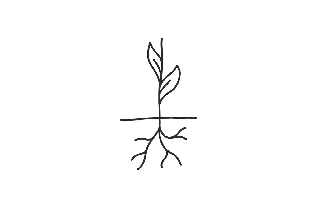 roots-01.jpg