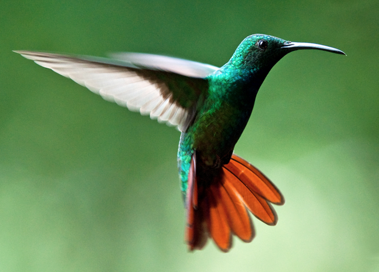 Humming Bird algorithem