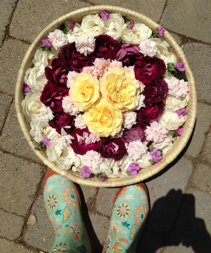 {Mandala created from flowers in my garden yesterday.}