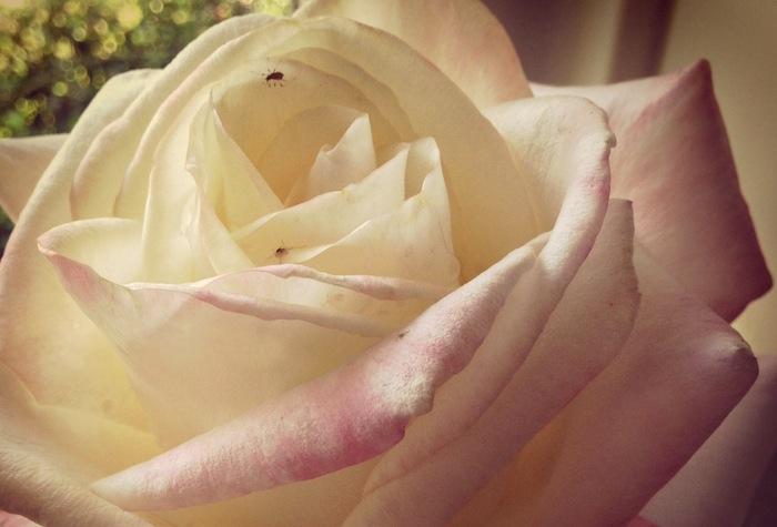 rosy_path.JPG