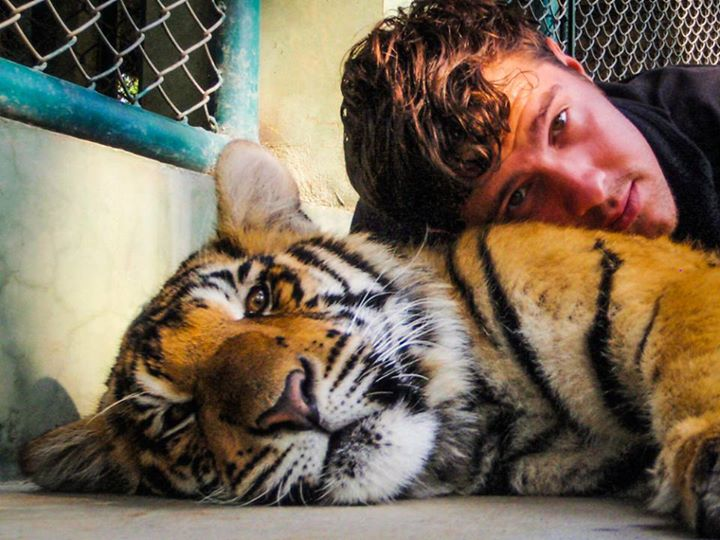 Is playing with young tigers the coolest job ever?