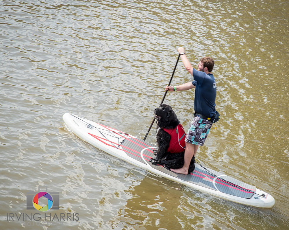 paddle board with your pooch