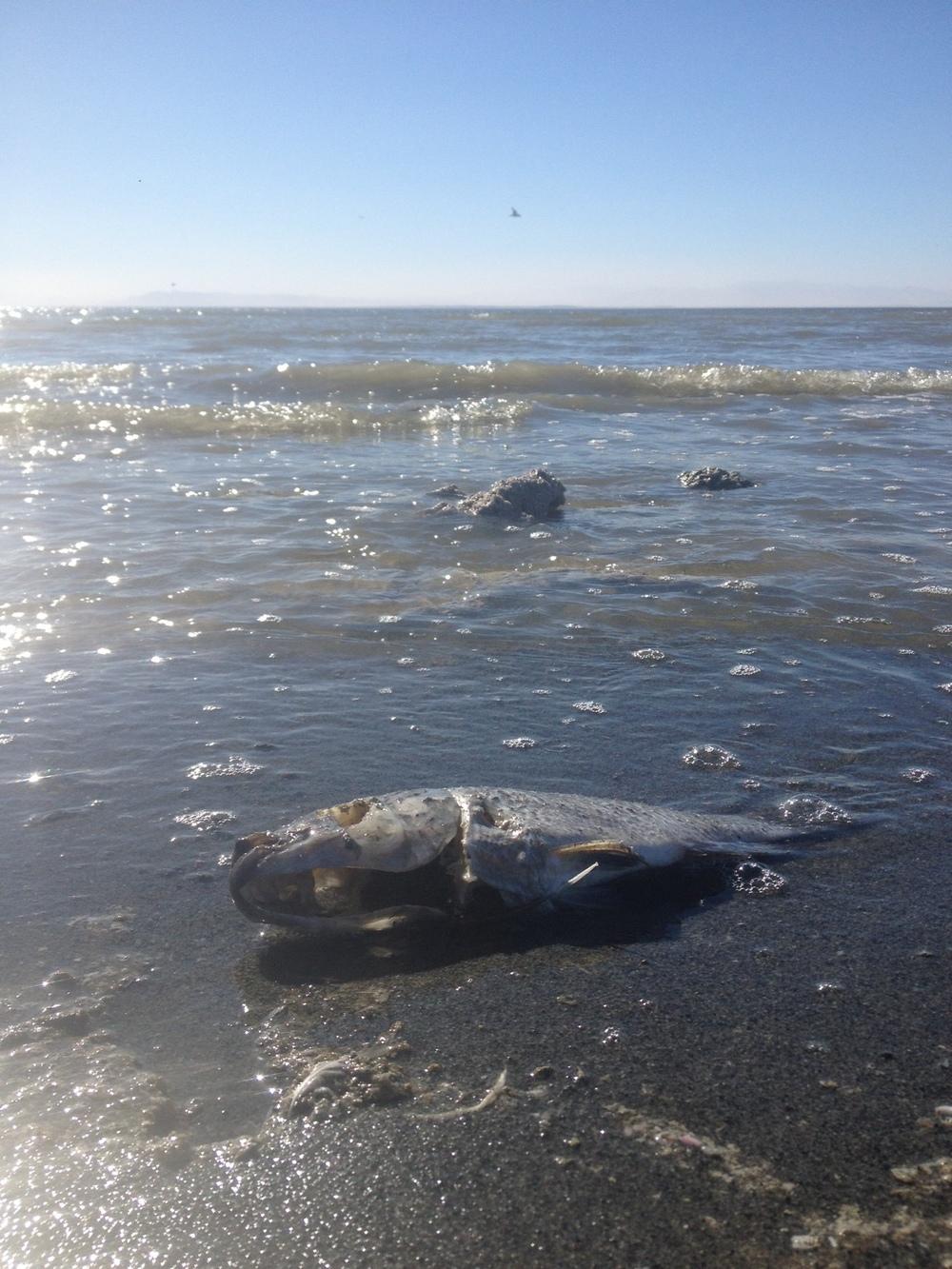 Joshua tree arizona and new mexico pt 1 california for Salton sea fishing