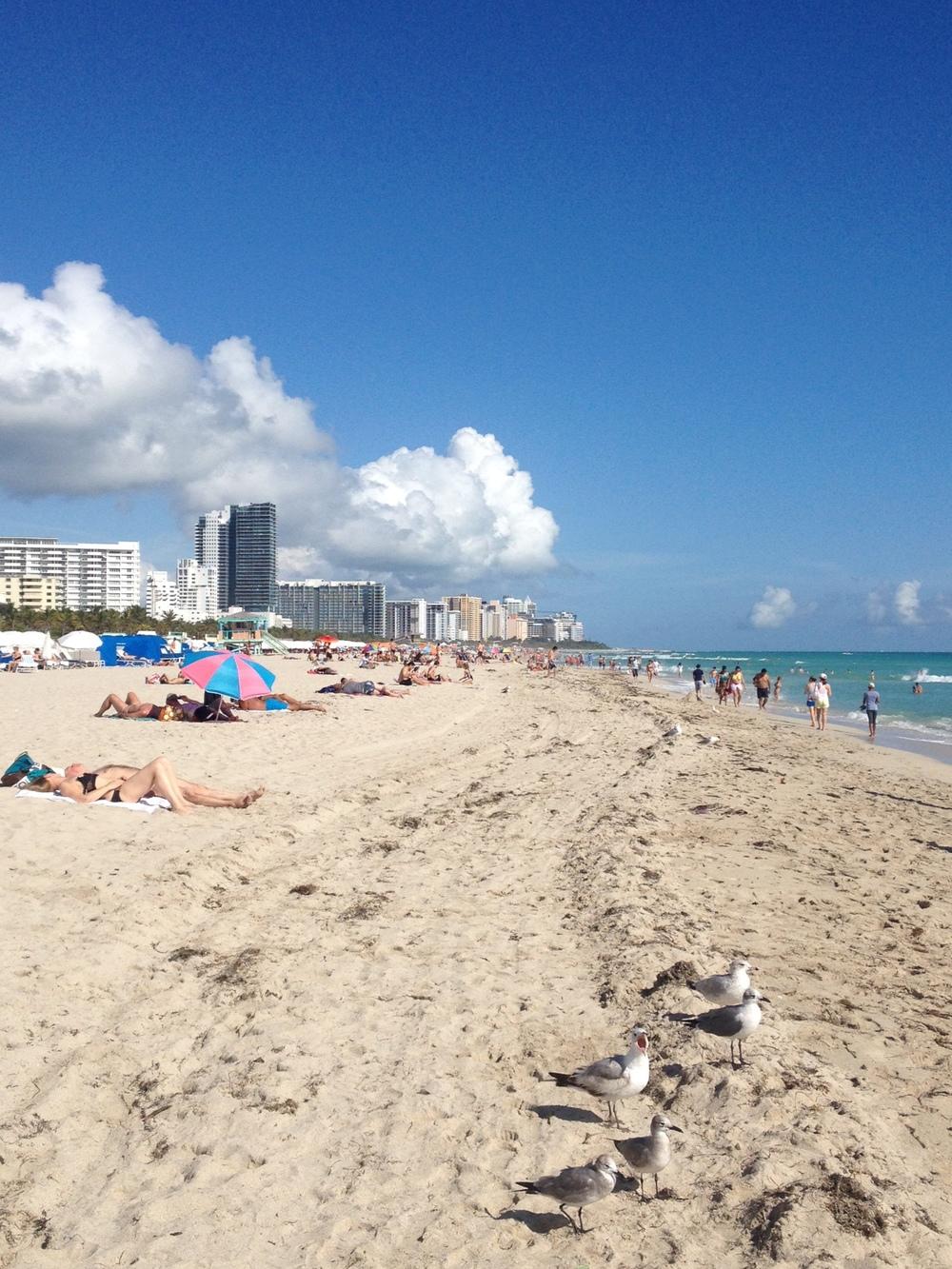Quintessential Miami