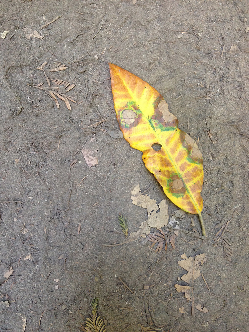 The colors of decaying leaves are something else.