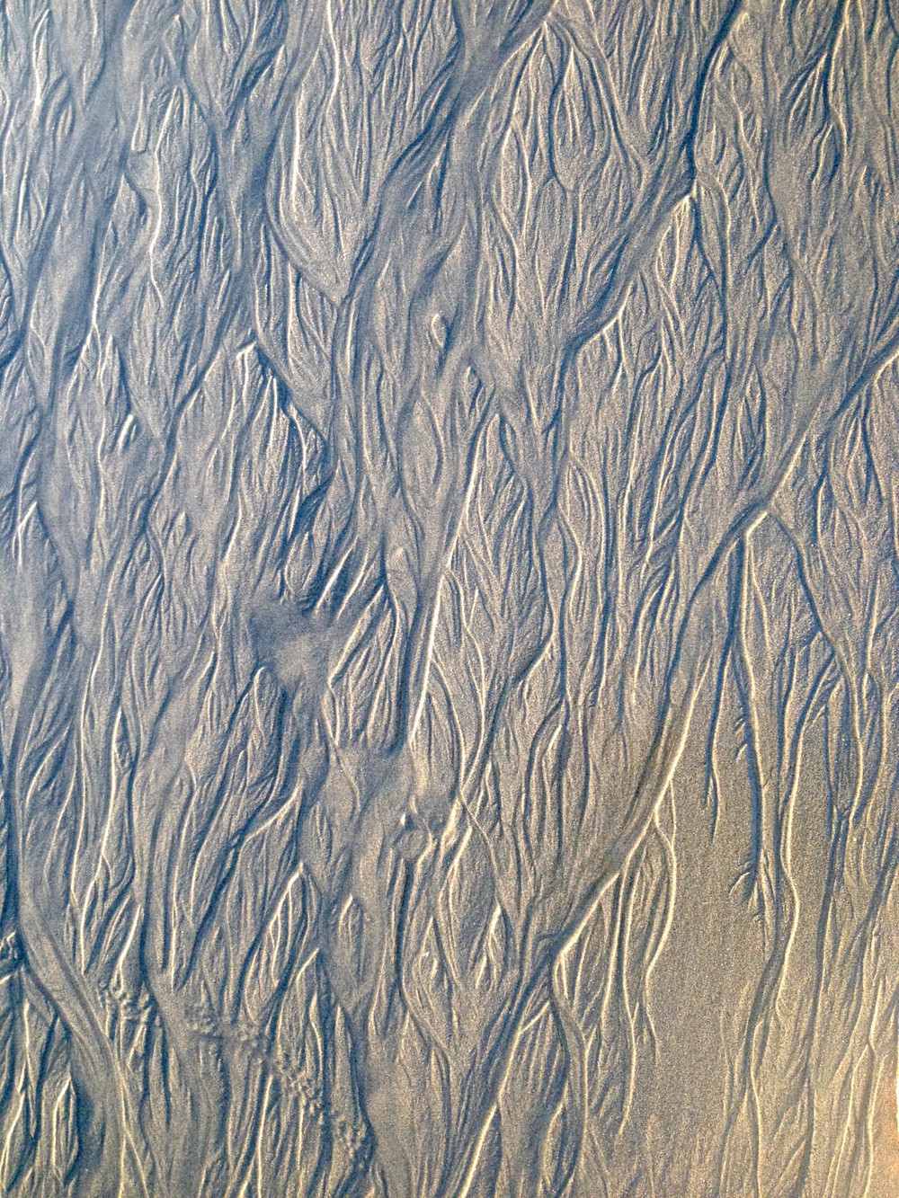 Sand lines with golden hour lighting.