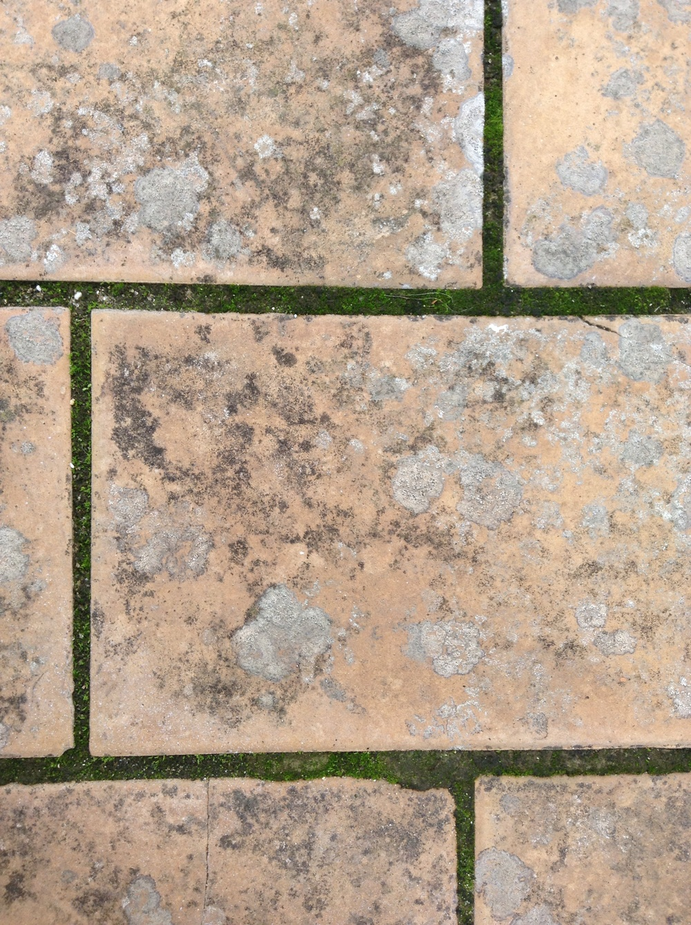 Spotty pink bricks on the studio rooftop with moss growing between.