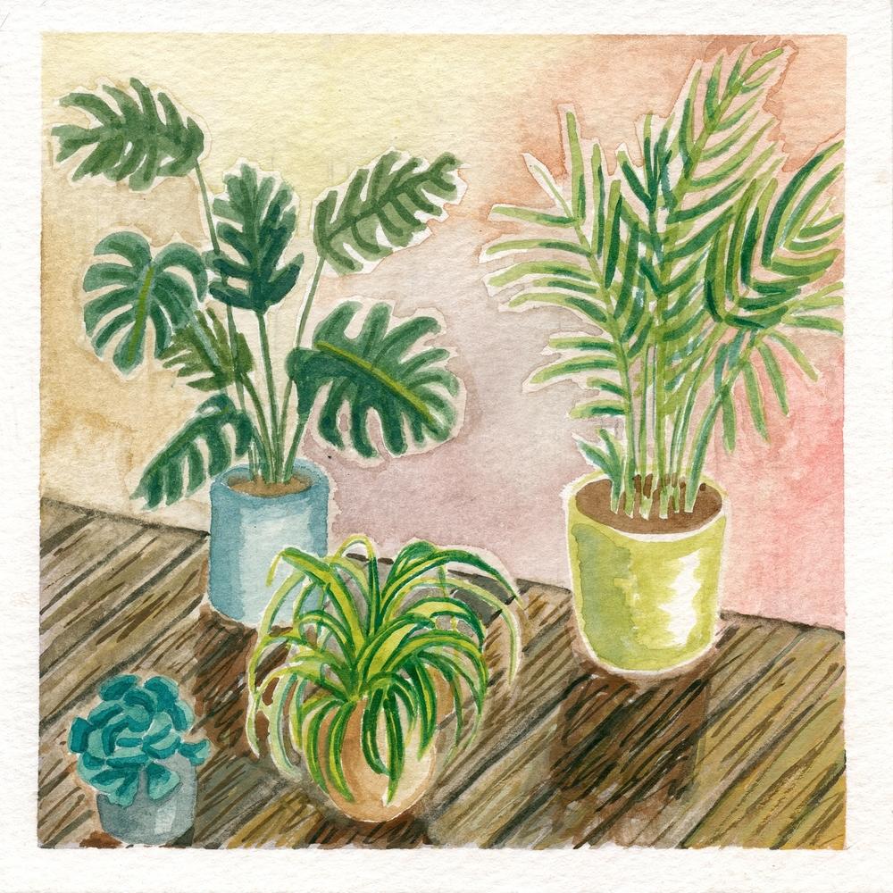 Day Plants