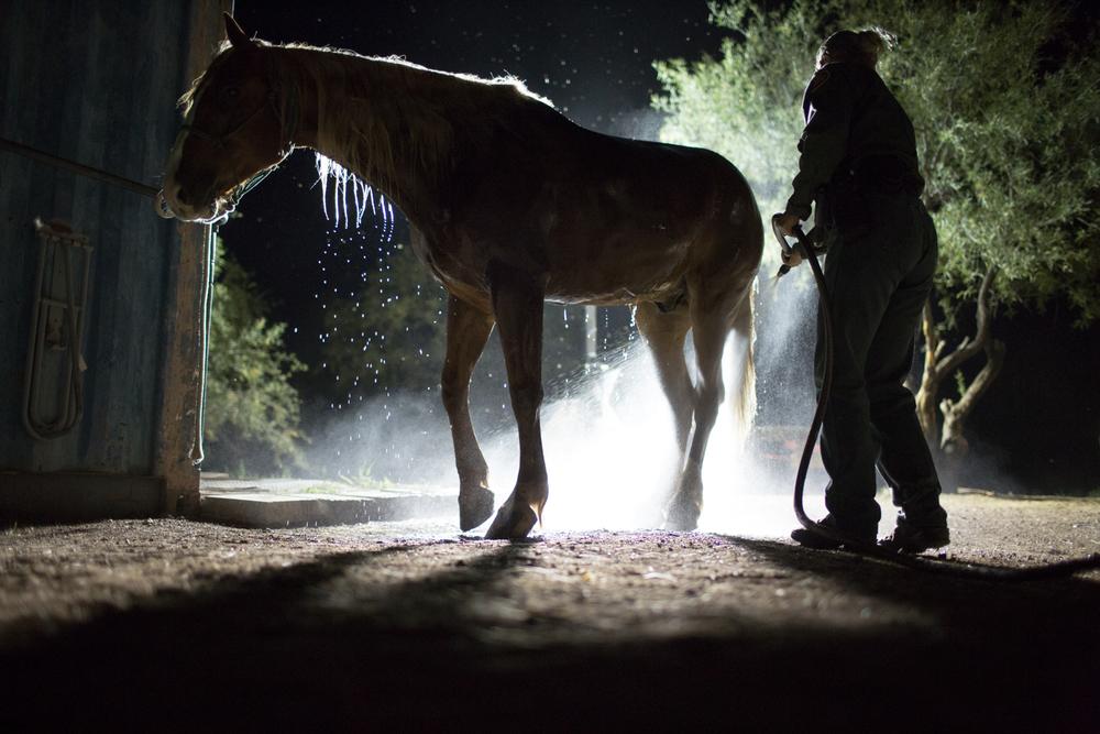 AZ-Horse Pitch-2-3.jpg