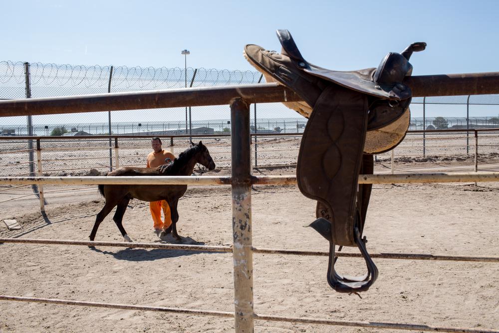 AZ-Horse Pitch-1-4.jpg