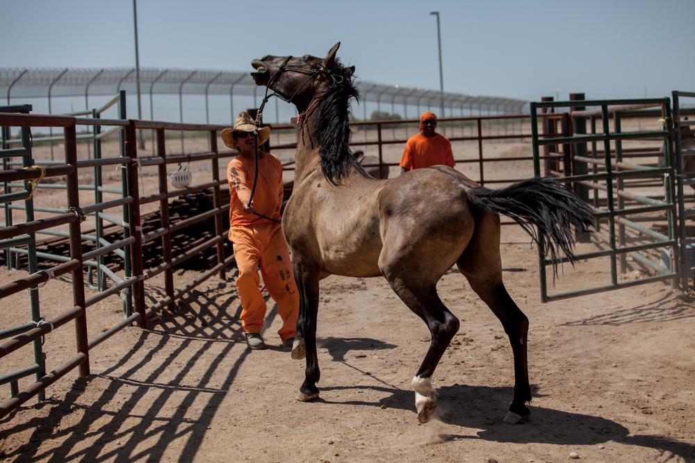 AZ-Horse Pitch-1.jpg