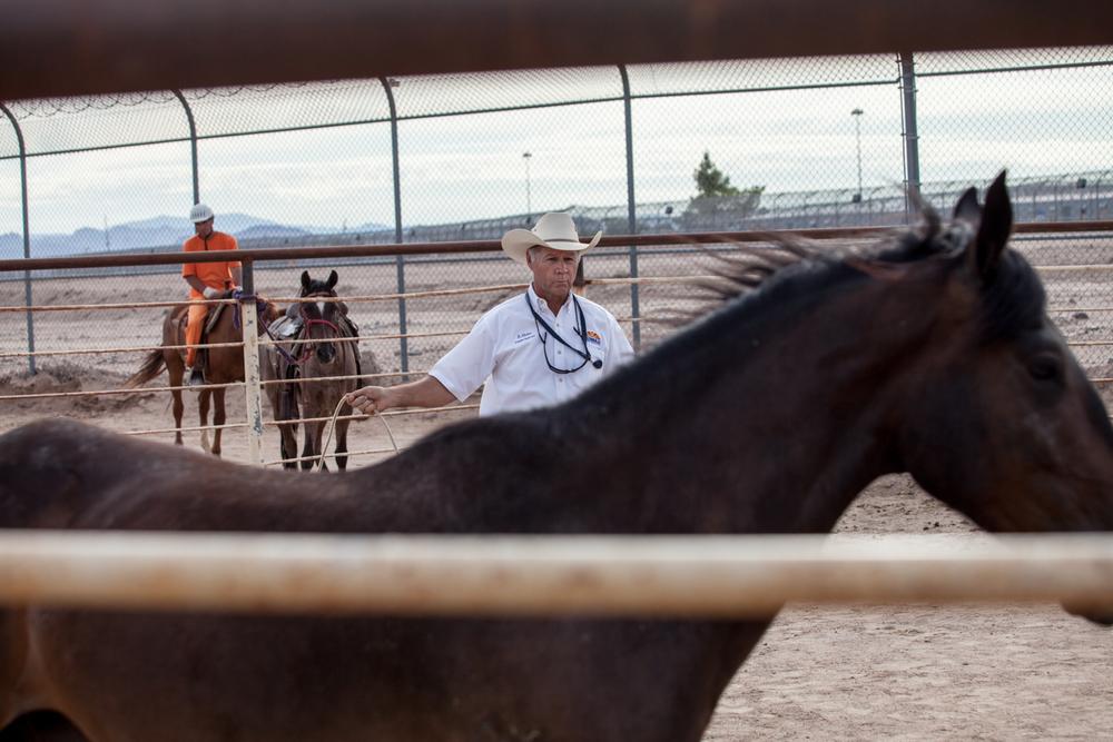horsess-5.jpg