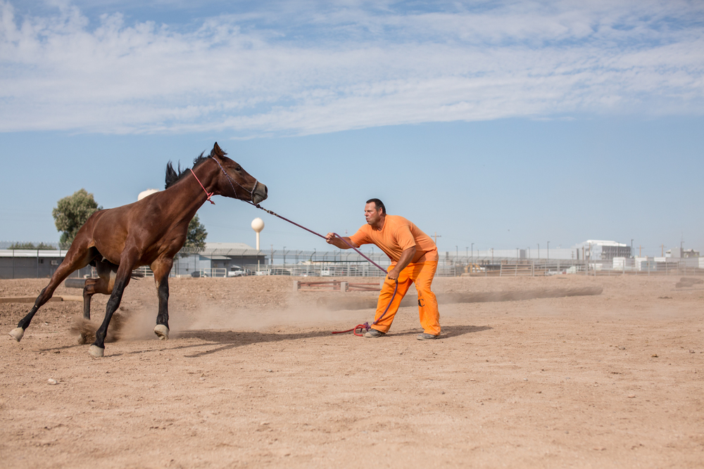 horsess-8.jpg