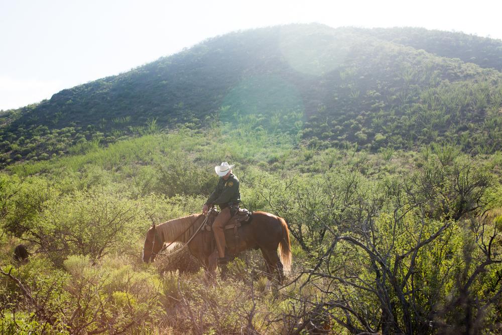 horsessss-4.jpg