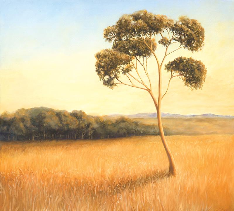 Afternoon Eucalptus