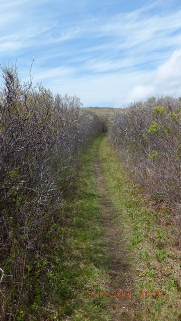 Trail through the shad bush
