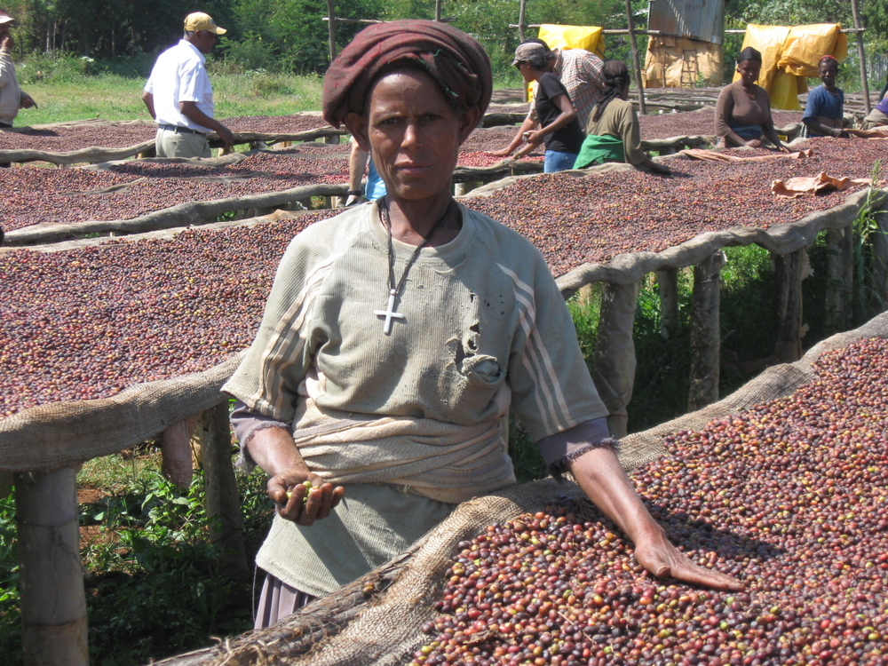 An experienced hand picks out defects at Ayehu Farm, working with natural coffees drying on African beds