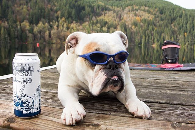 Though it's off-season, the WWU Wakeboard Team still has practice. With our sponsorship, we make sure they stay fueled with our booch while Munch supervises and ensures they stay safe in the water. Who wouldn't love an English bulldog lifeguard? Keep up the hard work @wwuwake! . . . #livehealthylivehappy #kombucha #kombuchatown #booch #wwu #bellingham #englishbulldog #dog #bulldog #cleansing #organic #nongmo #wakeboard #practice #drink #beverage #sponsor