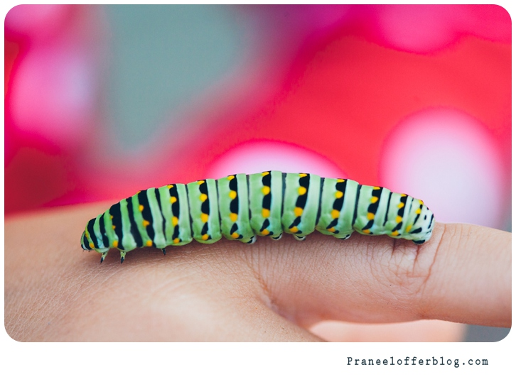 caterpillar (5 of 12)