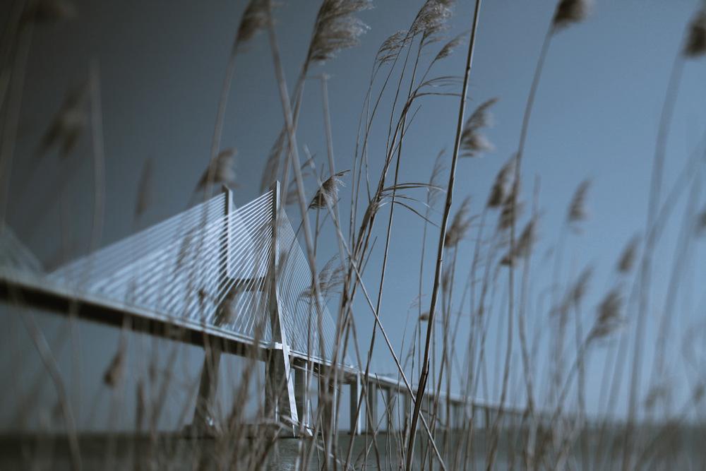 Landscapes-17.jpg