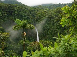 jungle-bush-fog-forest-jungle-lpaper-nature-rain-forest-tropical-waterfalls.jpg