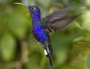 costa-rica-fauna-11-300x230.jpg