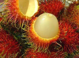 Rambutan-Fruit-Costa-Rica-272x200.jpg