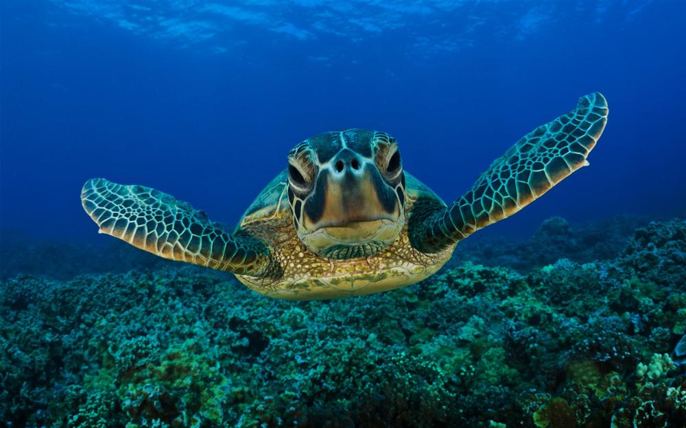 sea-turtles-1.jpg