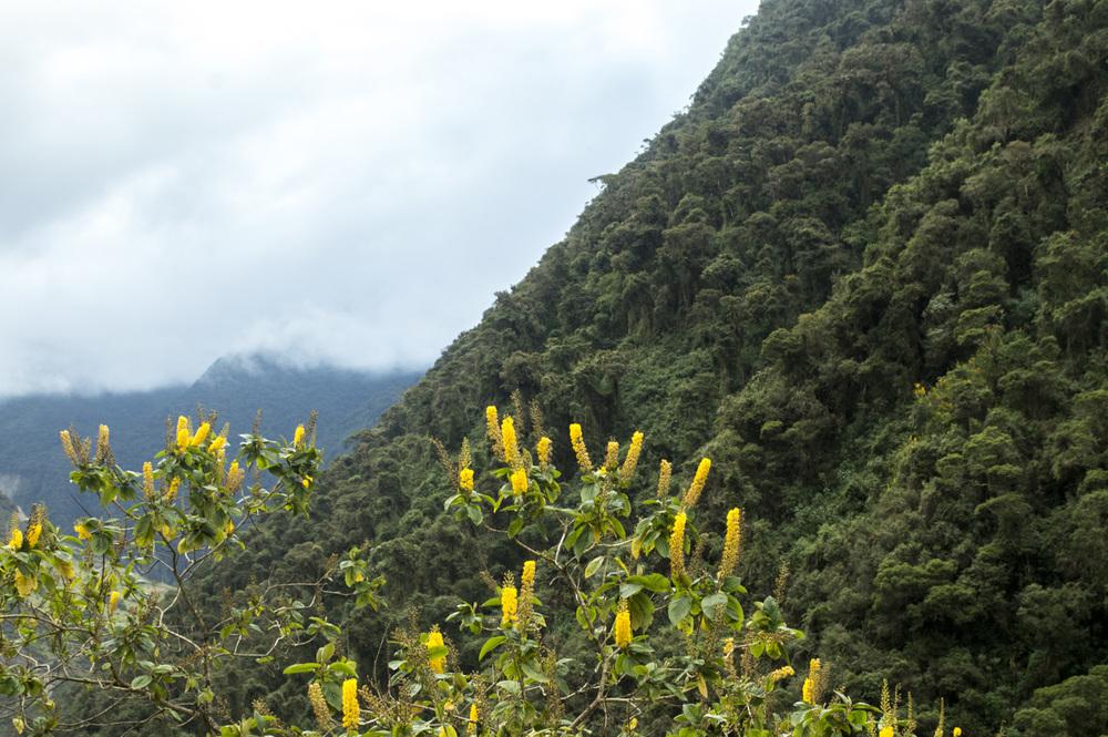 Inca 2 flowers.jpg