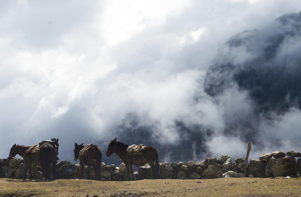 Inca 2 horse overlook.jpg
