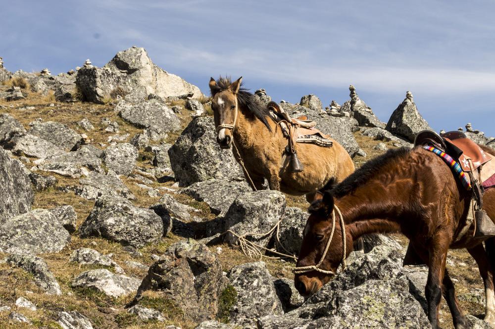 Inca 2 horses.jpg